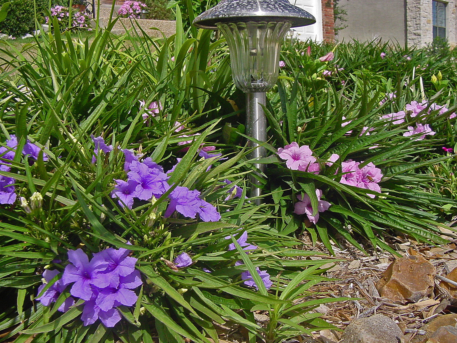 PLANTanswers: Plant Answers > 12 Months of Watersaver Landscape ...