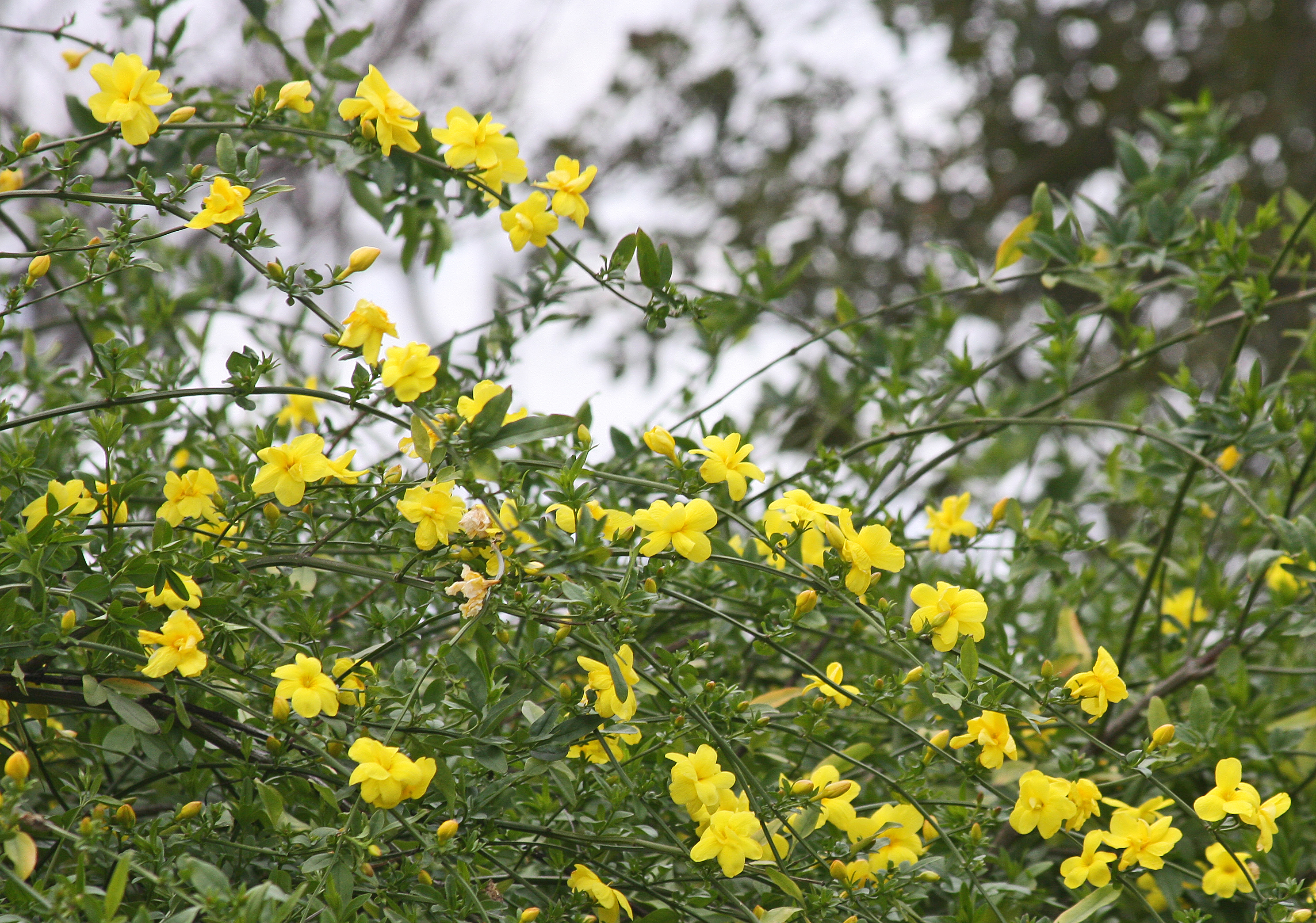 Garden Bush: PLANTanswers: Plant Answers > 12 Months Of Watersaver