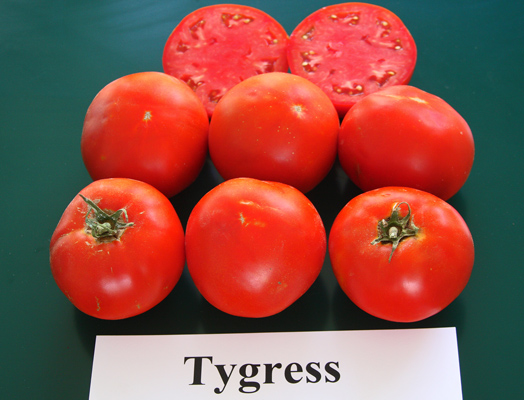Tygress - Rodeo Tomato 2013