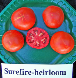 Surefire-heirloom Tomato.