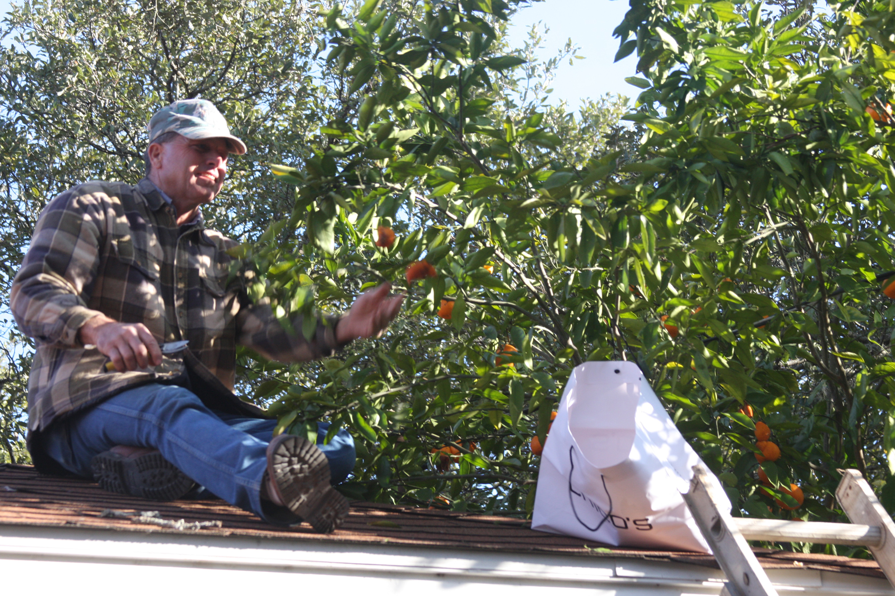 Plantanswers Plant Answers Gt Pruning Of Citrus And
