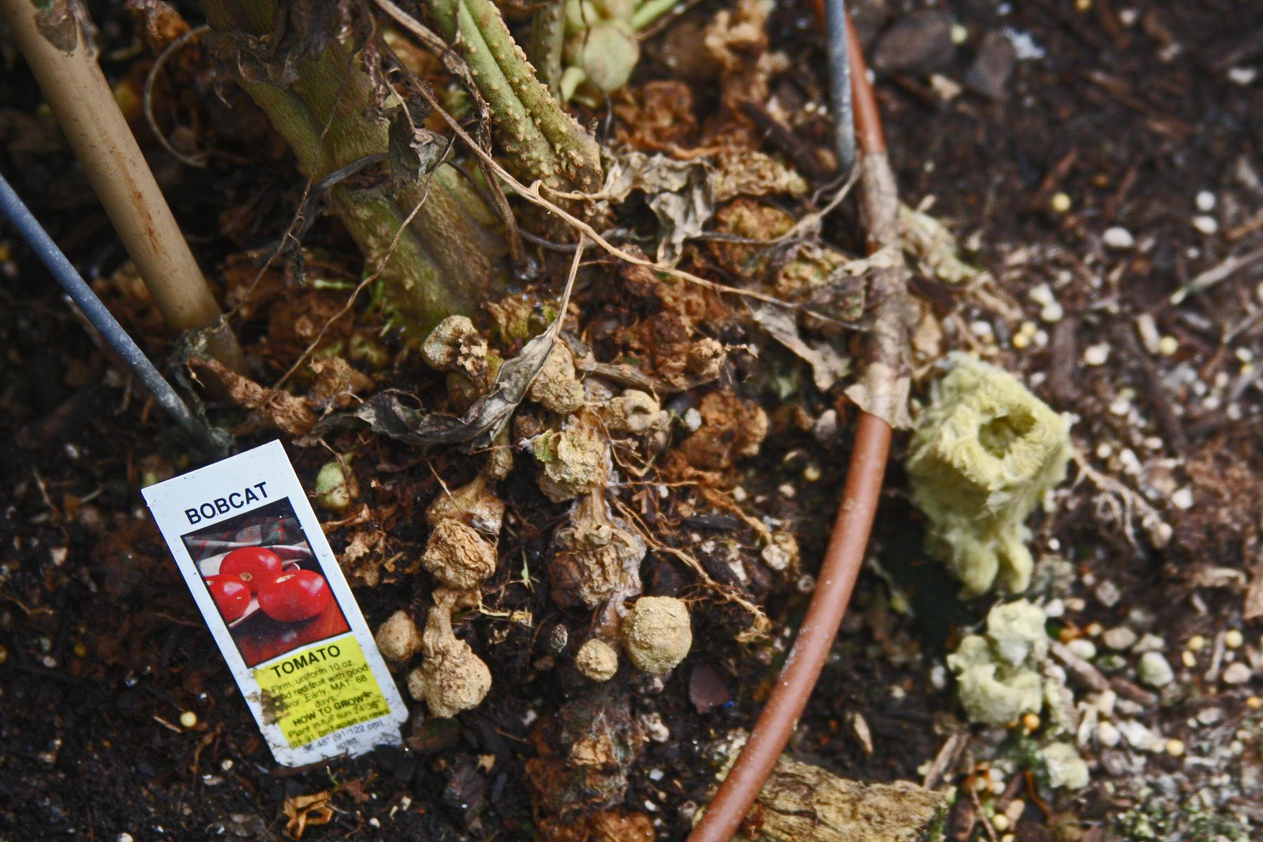 Nematodes Garden Gallery Garden Ftempo