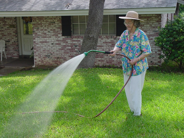 Plantanswers Plant Answers Brown Spots In The Lawn And