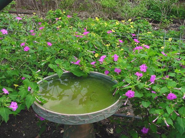 Plant answers mightylinksfo