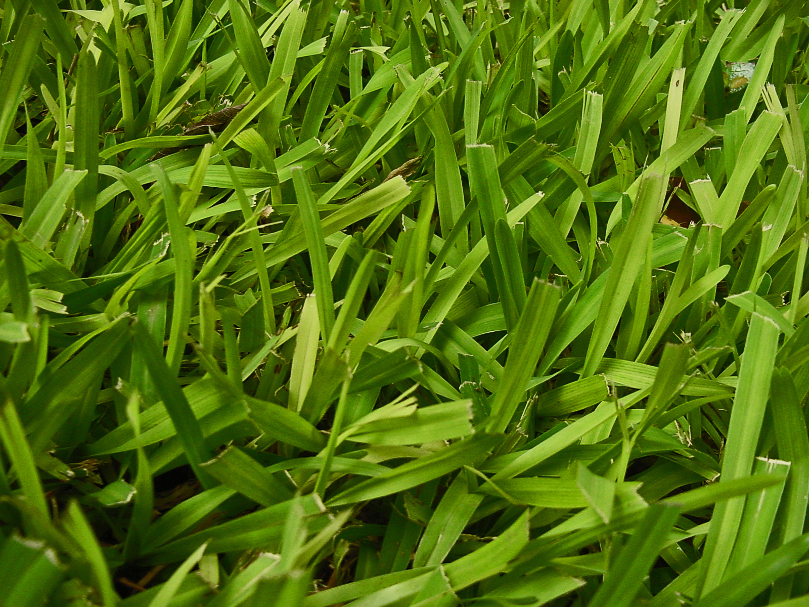 how to get thick green grass