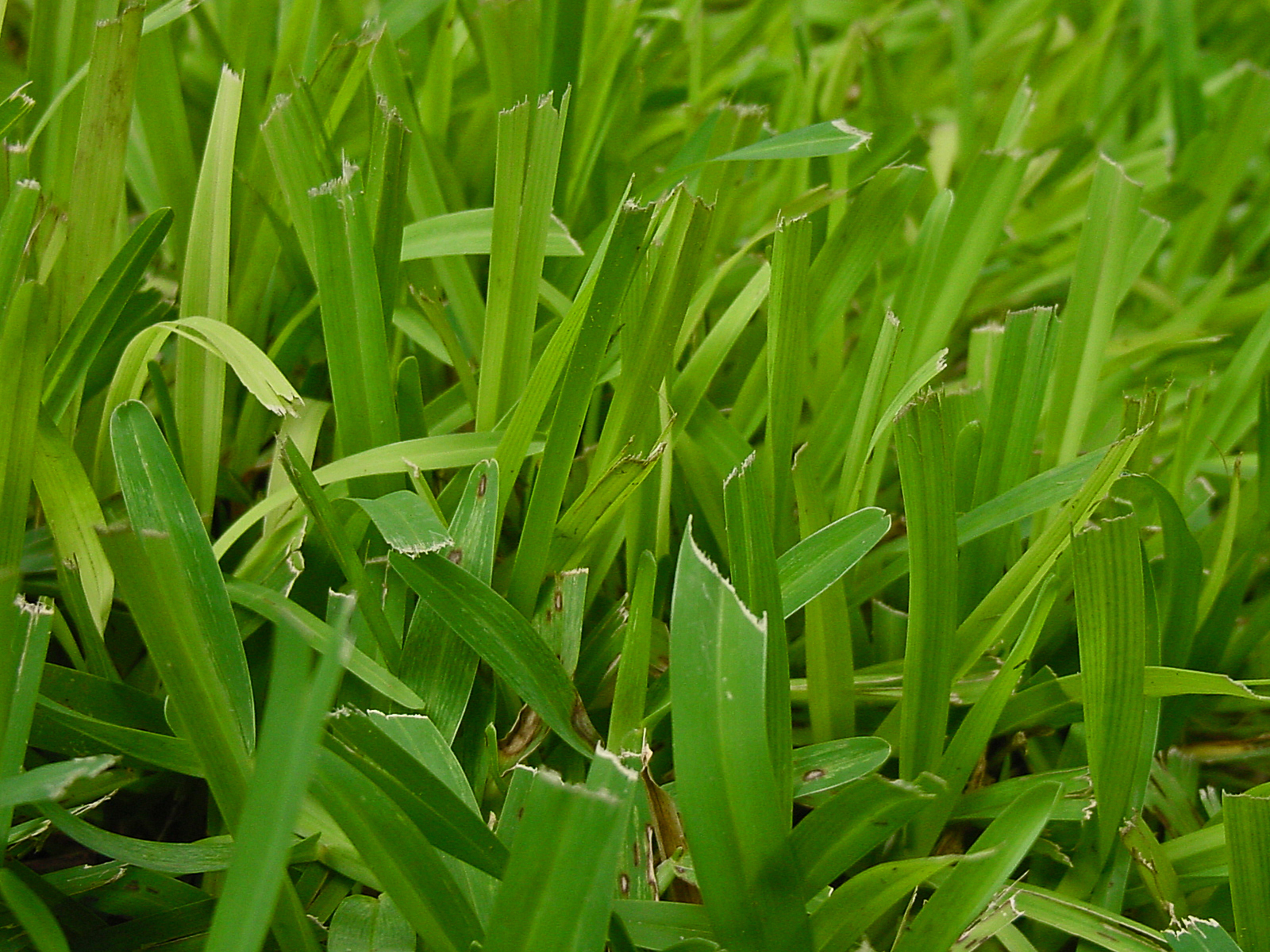 what benefit is a lime application on grass